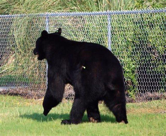 The bear panic