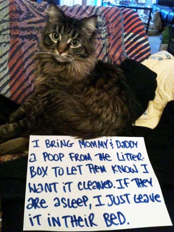 cat bring poop into bed