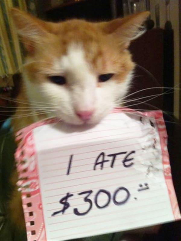 cat ate $300