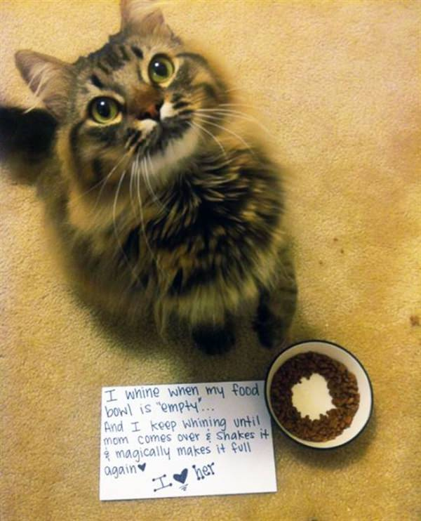 cat and empty bowl