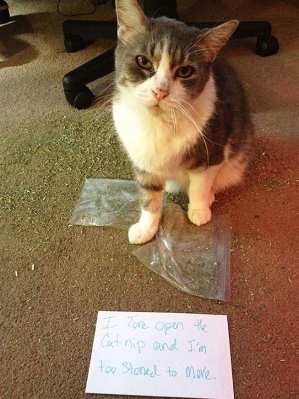 cat stoned by catnip