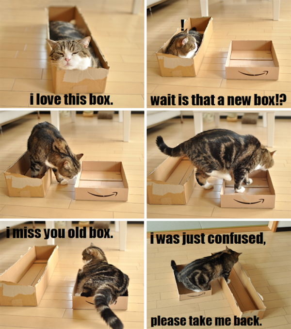 cats like box