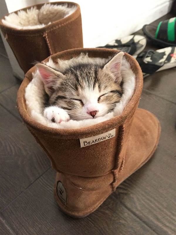 Cat like to sit in boot