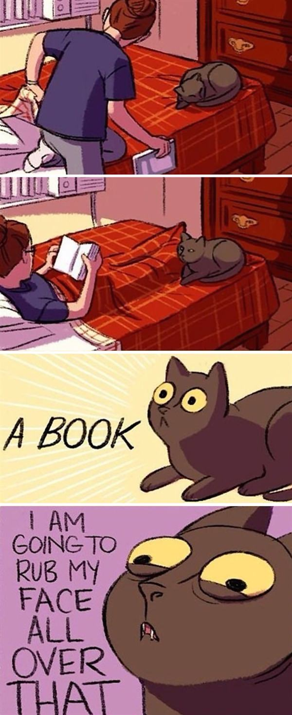 cat rub up on book
