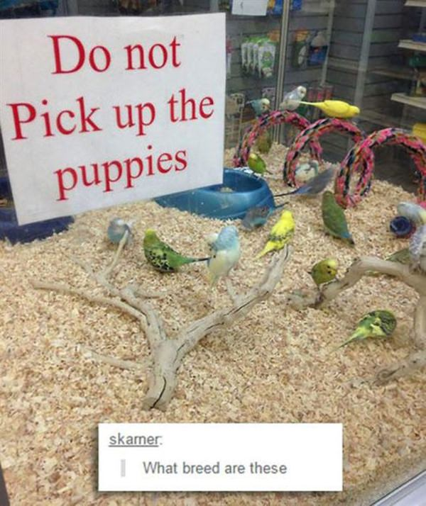 Do not pick up puppies