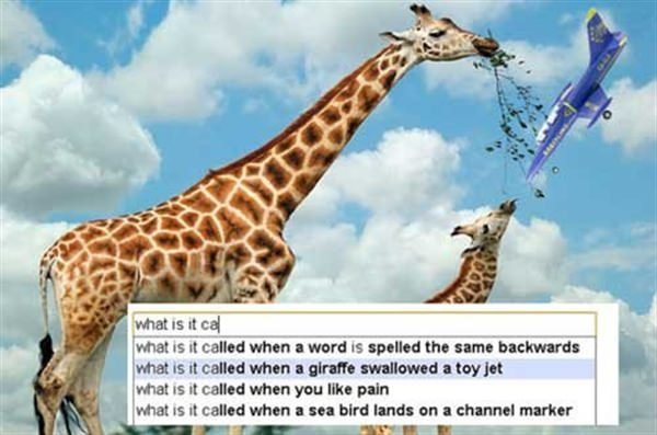 What is it called when a giraffe swallowed a toy jet