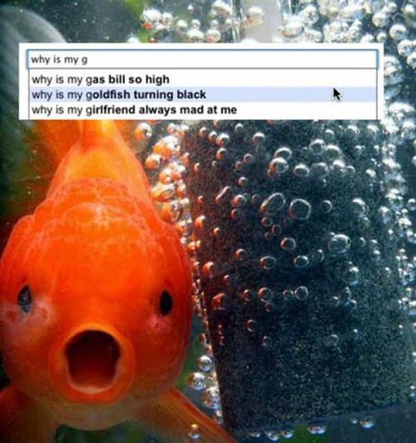 Why is my goldfish Turing black