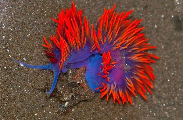 15-sea-slugs-082915-12