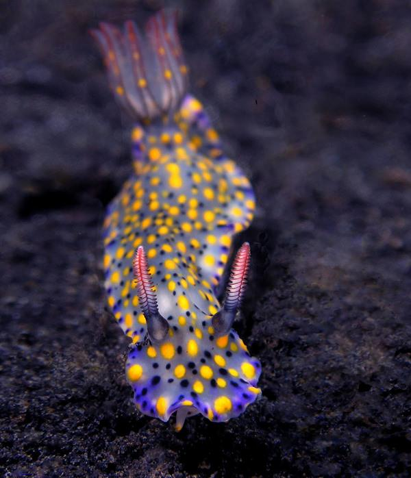 15-sea-slugs-082915-6