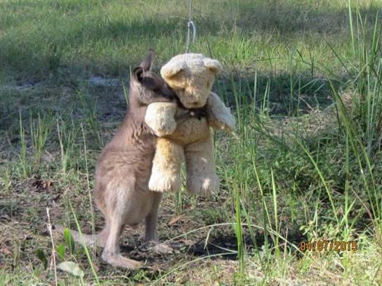 animal-hugging-082815-1