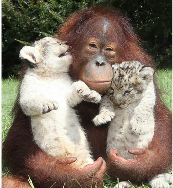 animal-hugging-082815-13