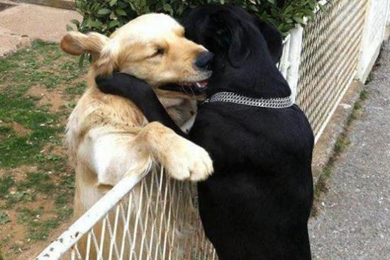 animal-hugging-082815-14