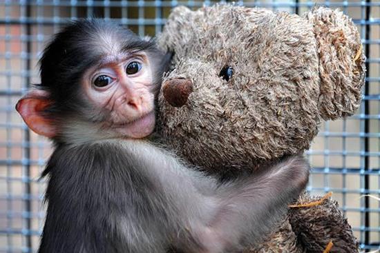 animal-hugging-082815-9