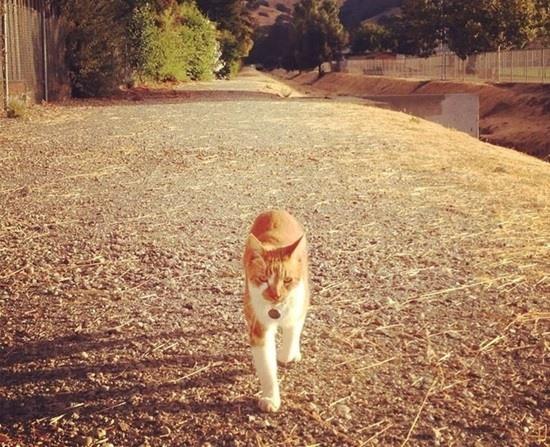 bubba-cat-student-082815-1