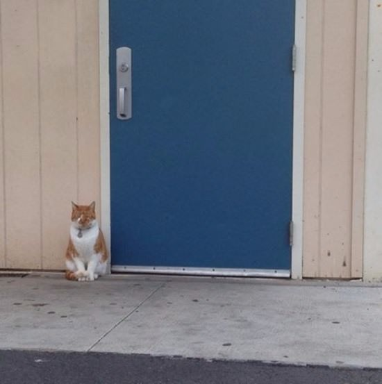 bubba-cat-student-082815-2