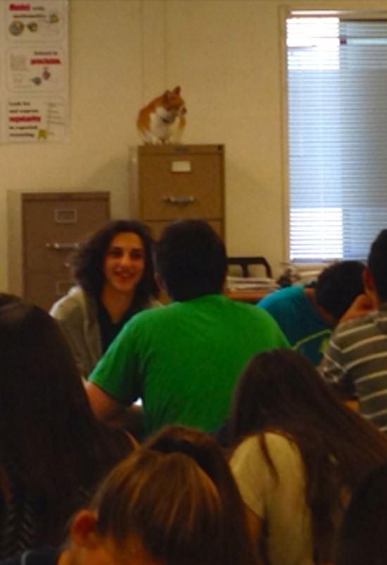 bubba-cat-student-082815-6