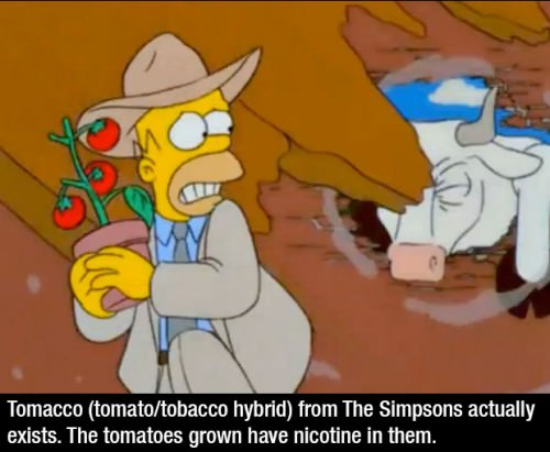 simpsons-fact-083115-3