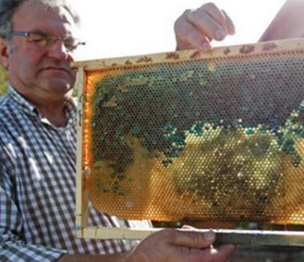 blue-honey-091315-2