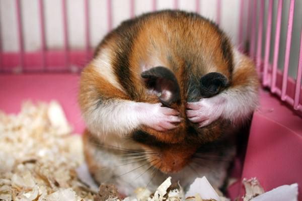 cute-hamster-092015-10