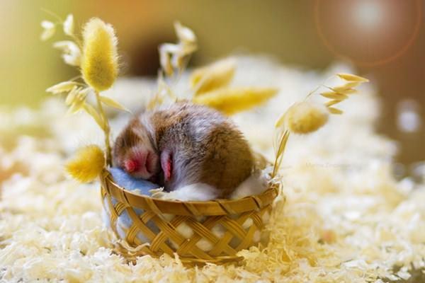 cute-hamster-092015-12