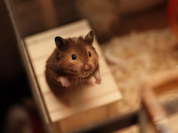 cute-hamster-092015-13