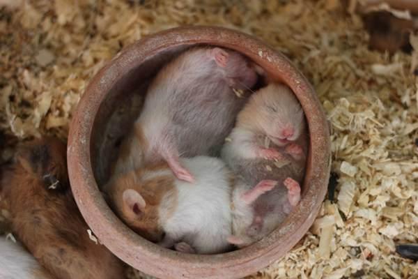cute-hamster-092015-15