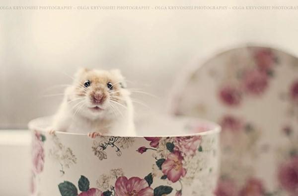 cute-hamster-092015-17