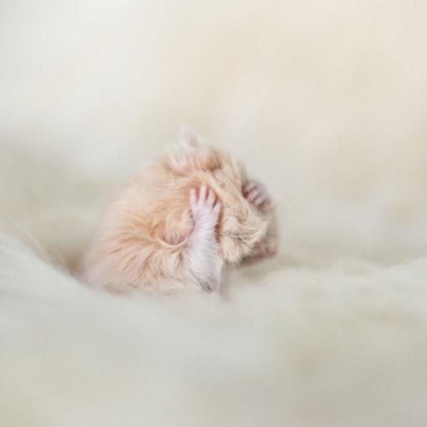 cute-hamster-092015-19