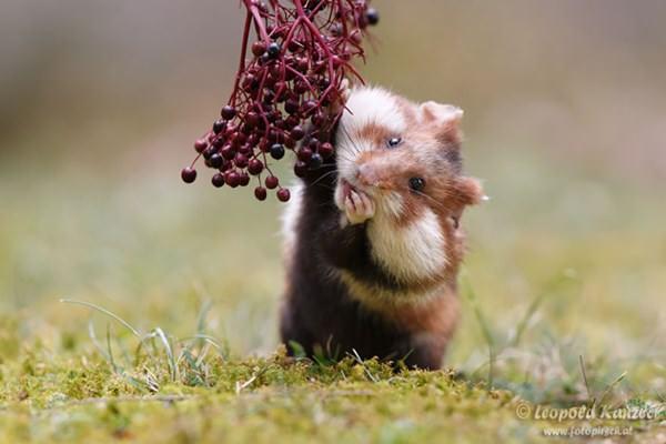 cute-hamster-092015-22