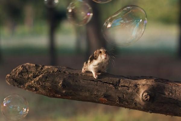 cute-hamster-092015-23