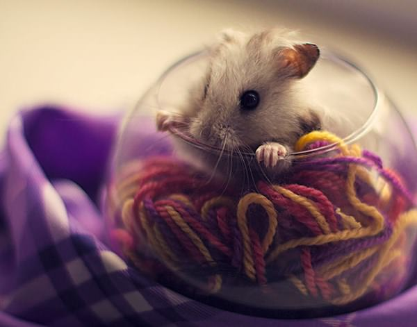 cute-hamster-092015-24