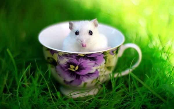 cute-hamster-092015-3