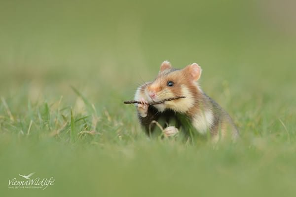 cute-hamster-092015-4