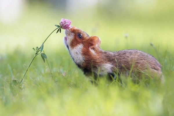 cute-hamster-092015-5