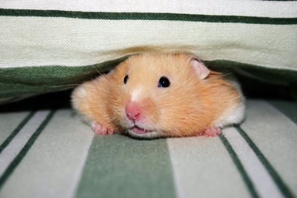 cute-hamster-092015-6