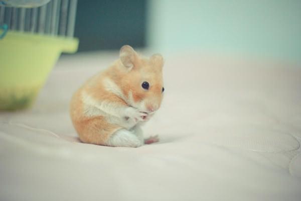 cute-hamster-092015-8