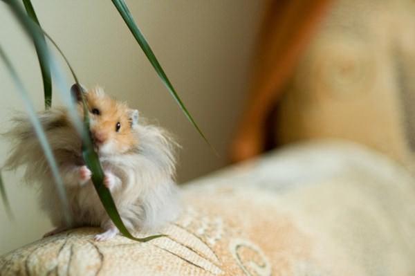 cute-hamster-092015-9