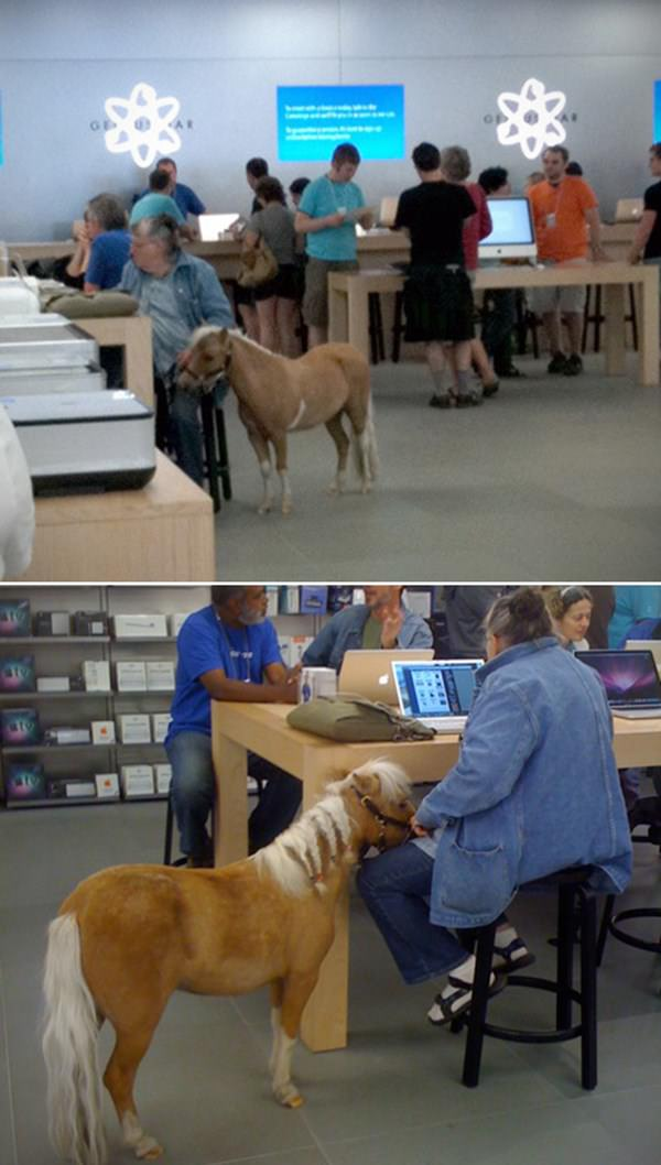 wtf-apple-store-moment-090915-12