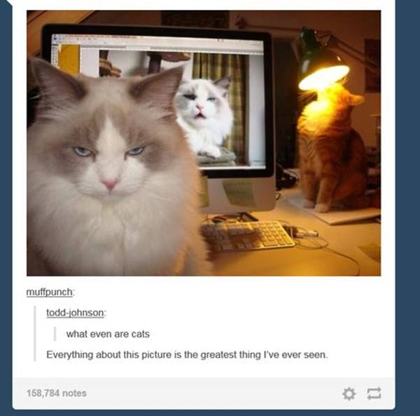 how-to-be-cat-tumblr-100215-7
