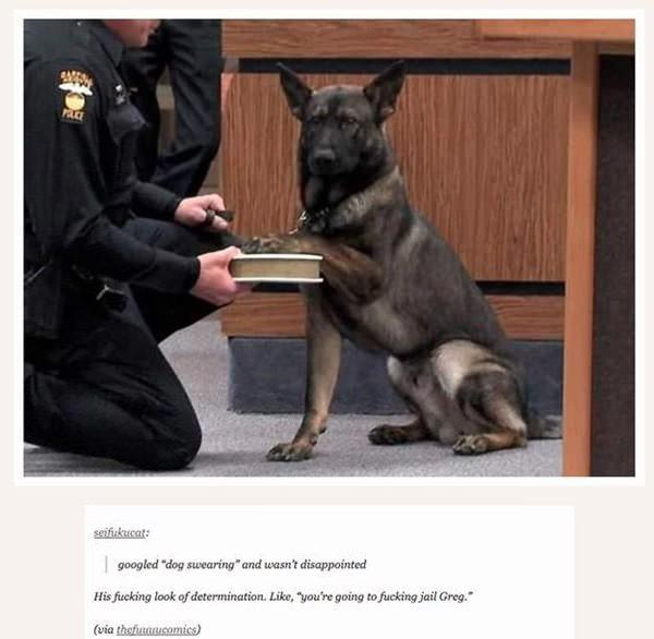 tumblr-funy-dog-100715-1-min