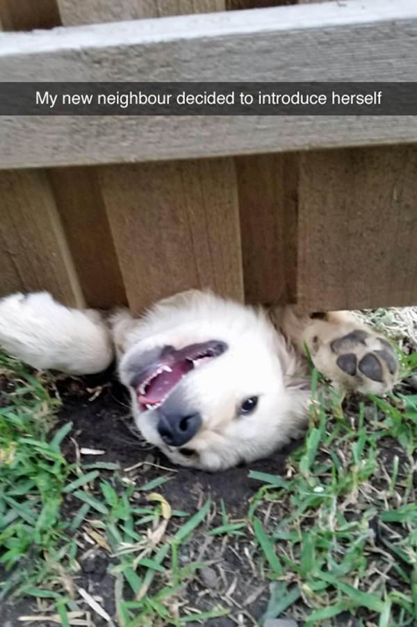 tumblr-funy-dog-100715-12-min