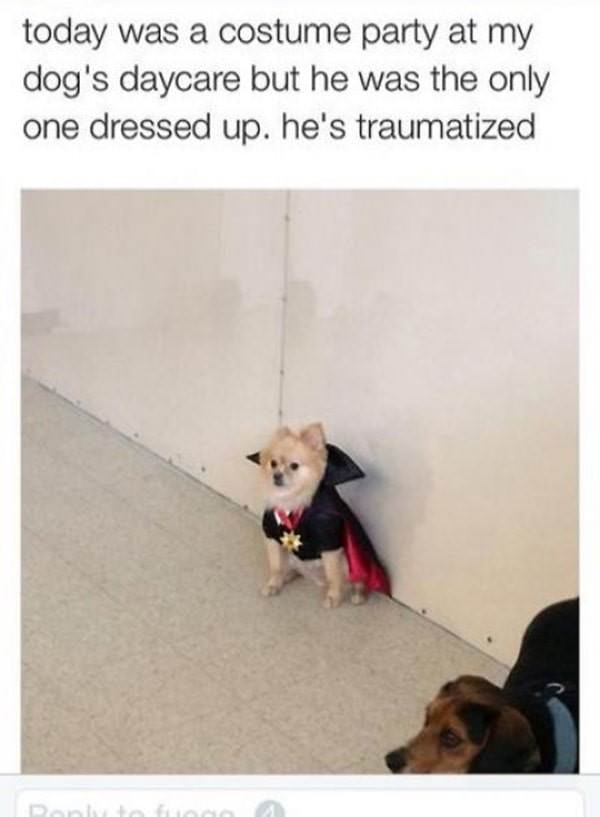 tumblr-funy-dog-100715-13-min