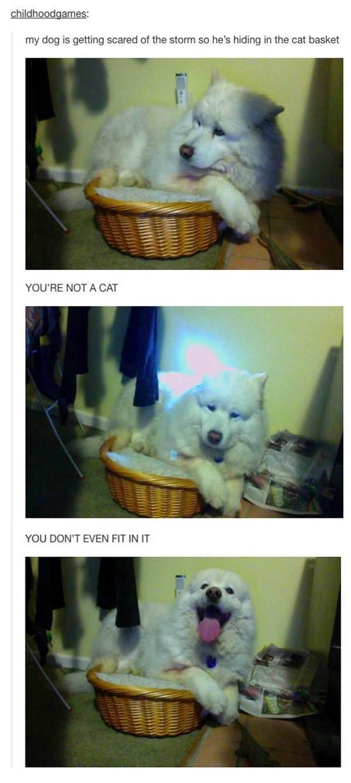 tumblr-funy-dog-100715-14-min