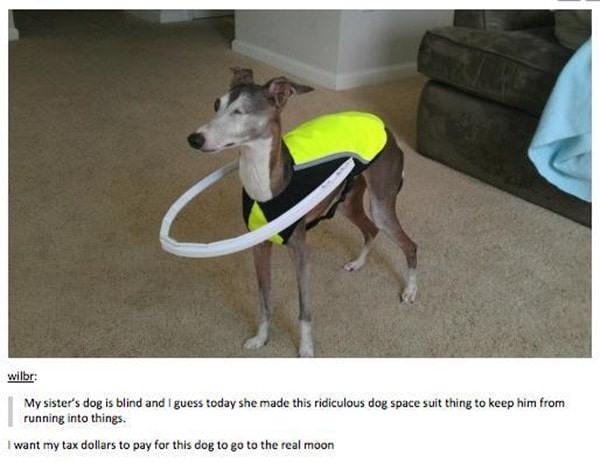 tumblr-funy-dog-100715-15-min