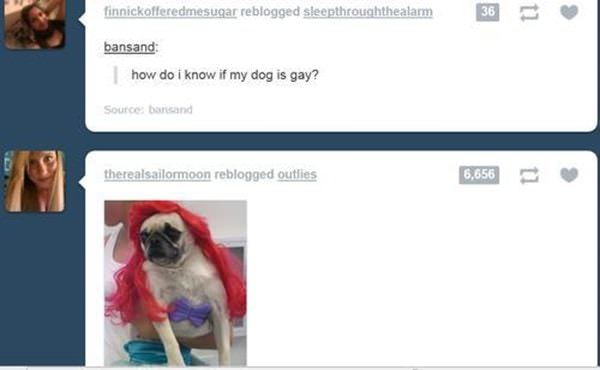 tumblr-funy-dog-100715-16-min