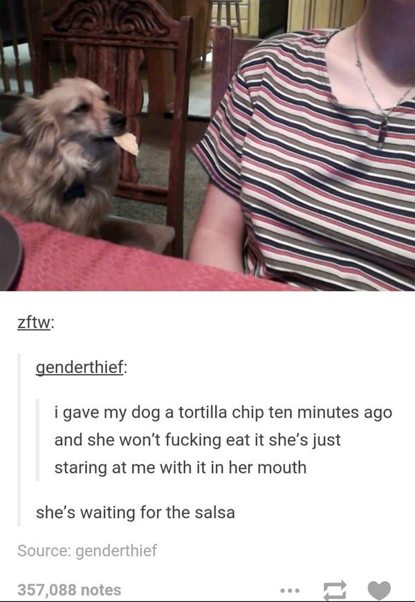 tumblr-funy-dog-100715-17-min