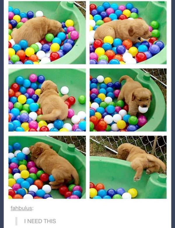 tumblr-funy-dog-100715-19-min