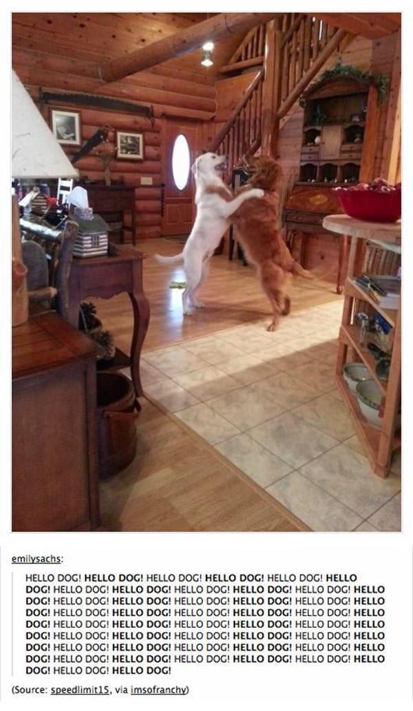 tumblr-funy-dog-100715-20-min