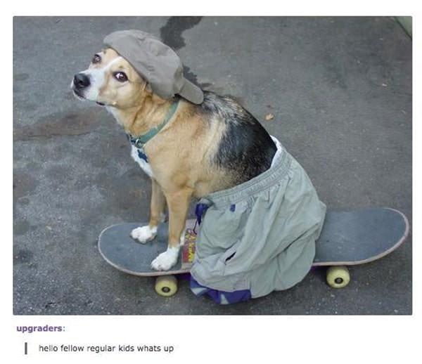 tumblr-funy-dog-100715-3-min