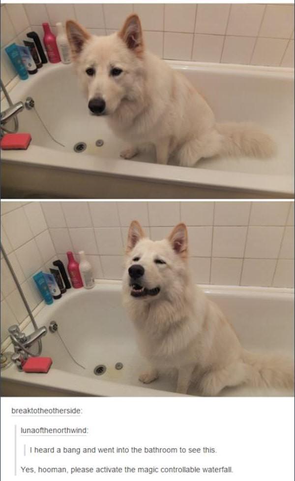 tumblr-funy-dog-100715-4-min